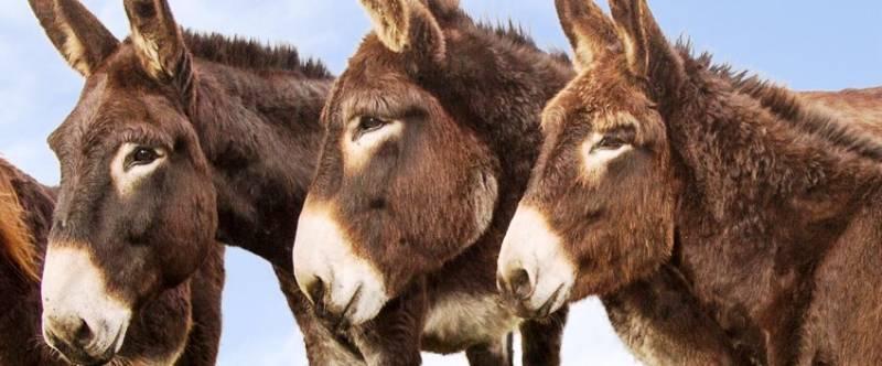 strandheem-ezelrijden